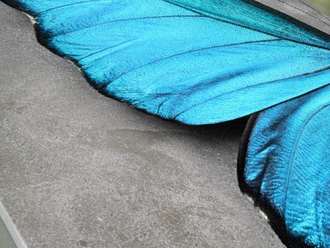 картина Синя пеперуда
