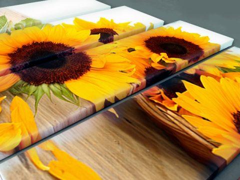 слънчогледи пано