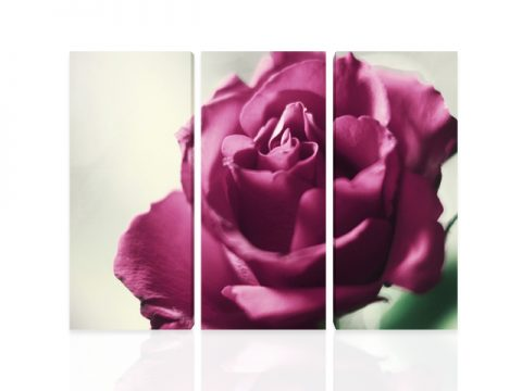 картина пано роза