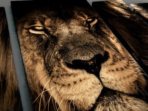 лъв пано