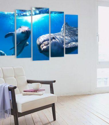 картини делфини риби животни