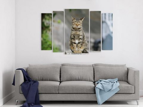 картина сива котка, онлайн магазин картини
